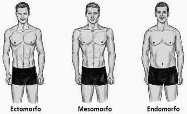 cele mai bune macrocomenzi pentru pierderea de grăsime endomorf