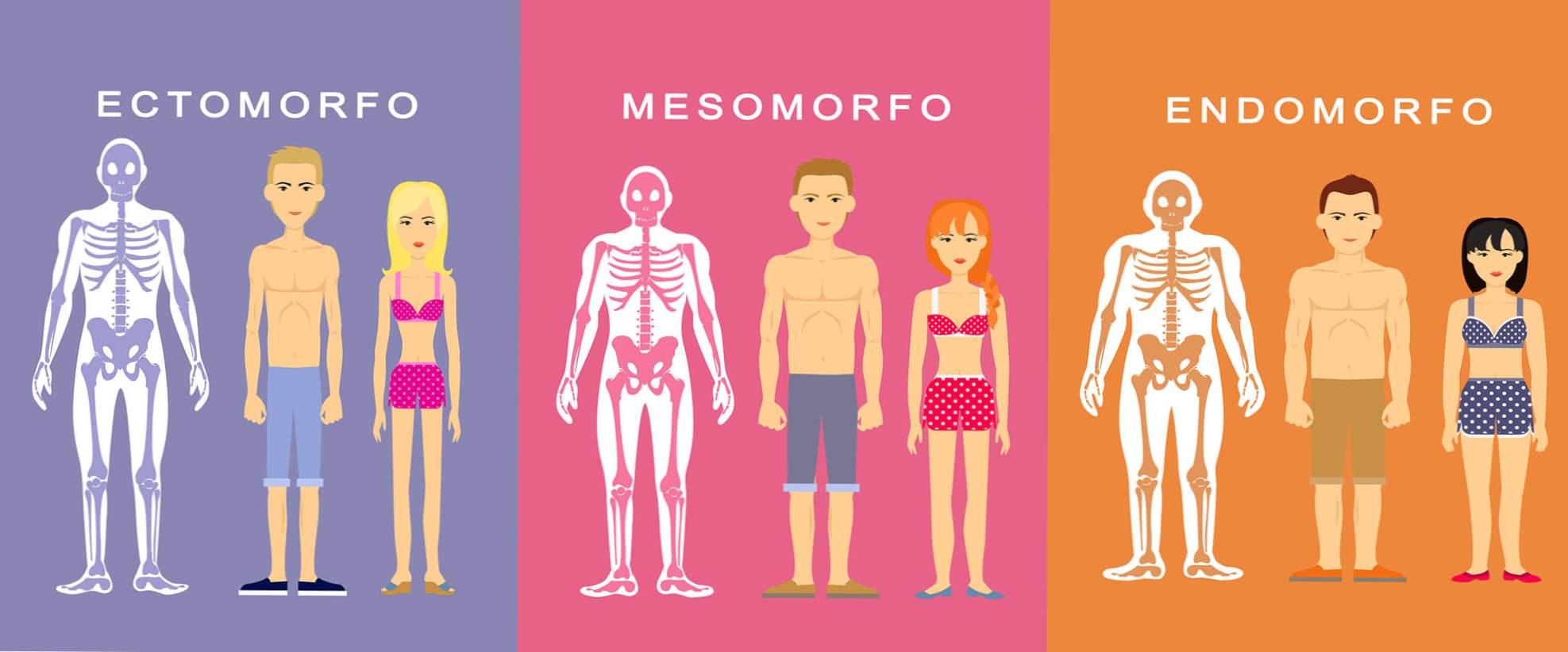 Ectomorf, Endomorph și Mesomorph: Cum să te antrenezi pentru tipul tău de corp
