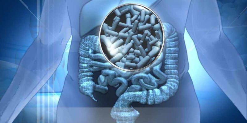 bacteriile intestinului ajută să piardă în greutate